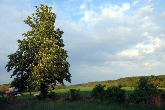 Blick nach Osten. Nach der Beseitigung einer Fichtenreihe erstmals sichtbar: die Landschaft, eine Rosskastanie und ein Holzapfel